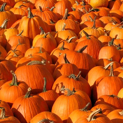 pumpkins and winter squash are finally in season and i m elated while ...