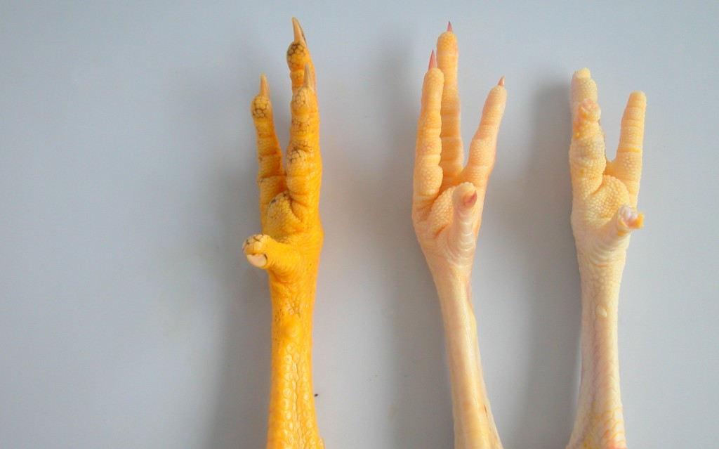 Voodoo Stock: Chicken Feet & Chili Peppers