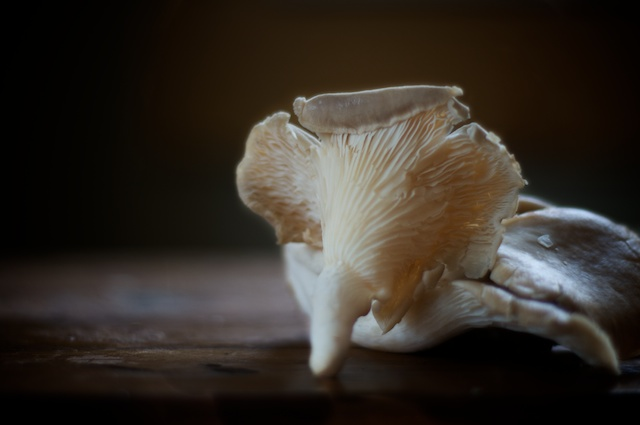 oyster mushroom for salisbury steak recipe