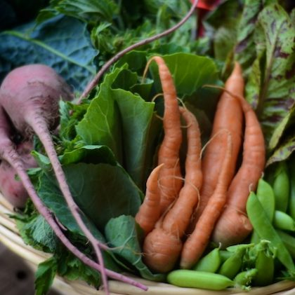 mystery veggies in your csa box? what to do with what's in your box.