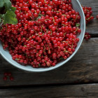 red currants for pie