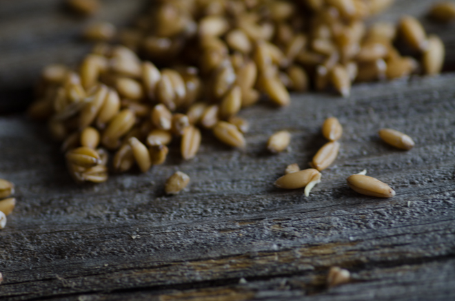 Sprouted Grain Flour