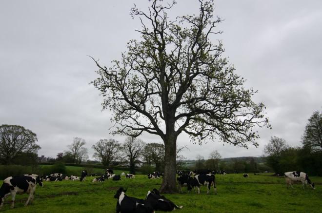 Devon Farm