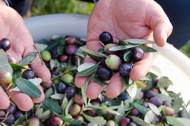 jovial olive oil-11