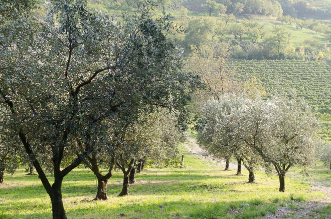 jovial olive oil-5