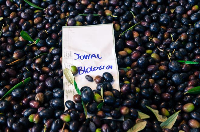 jovial olive oil