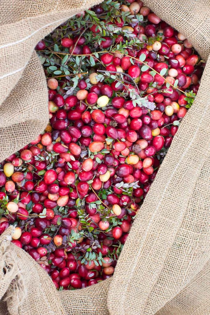 Cranberries can be harvested with water, or, more traditionally, through dry harvesting which is extremely labor intensive.