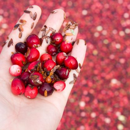 The Cranberry Harvest (And Where to Buy Sustainably Farmed Cranberries)